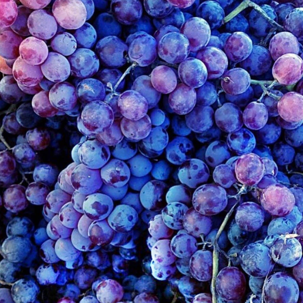Avian Digestive System 51449308 as well 01spolc likewise Digestive System 7353294 also Benefits Grapes additionally 8402649. on pharynx digestion